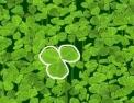 lucky-clover